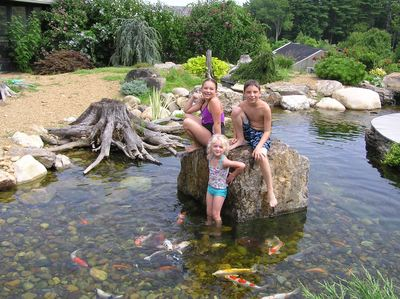 Nh koi pond contractor chester rockingham county new hampshire for Farm pond maintenance